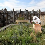 2011 Urban Farming in Review