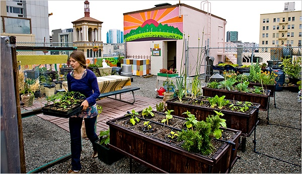 A Case for Growing Your Own Food In Suburbia or Not.
