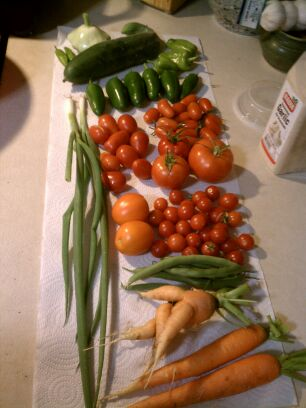 2012 Urban Garden in Review, by an Anonymous Contibutor