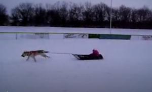avery sled